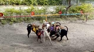 Monkey dog racing