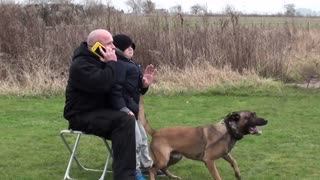 personal _ family protection dog training_2