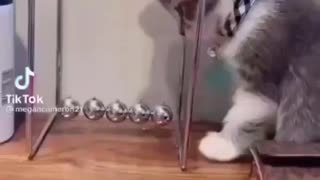 A smart cat rings a bell