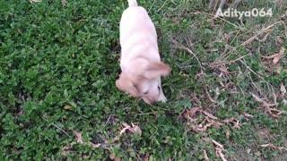 Slow motion video of golden retriever puppy running in a bush