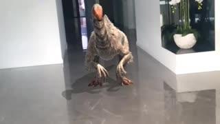 Dinosaur in my House