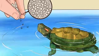 Know what to feed a turtle