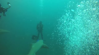 Incredible Shark Diving Experience