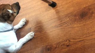 dog doesn't like robot vacuum cleaner