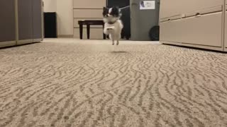 Slow motion puppy