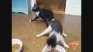 Animales borrachos videos graciosos