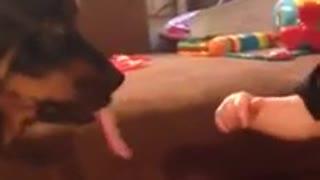 Niño intenta atrapar la lengua de un perro mientras lo besa