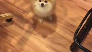 Dogs wanting puppy treats