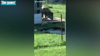 Funniest Animal video ever.