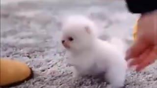 😍 Cute Baby Dogs – Lindos perritos bebes 😍