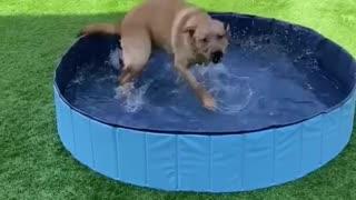 Dog Summer Get Away