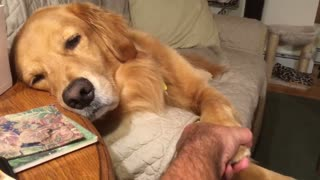 Dog begs for more attention in cutest possible way