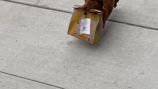 Tiny Dog Seen Delivering Takeout Food To Family