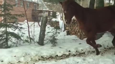 Horse loving snow