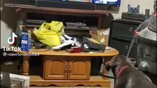 Good Dog Hates Biden