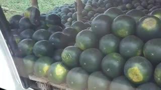 Land of Watermelon 🍉