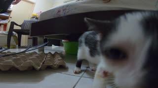 Injured Kitten Curious about Gopro Hero 7