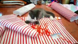 """Kitten adorably """"helps"""" owner wrap Christmas gifts"""