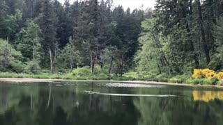 Osprey Swoops Down To Catch A Trout In Slow Motion