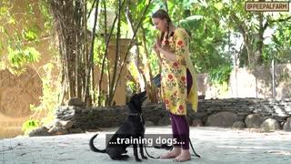 Dog Training | Farm Helpline! | Animal Rescue | Animal First Aid