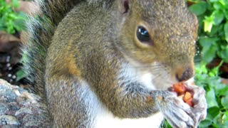 Hungry sguirrel