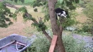 Kitty Clings to Brick Wall