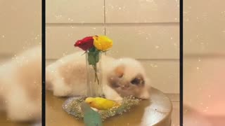 Cute cat playing with birds
