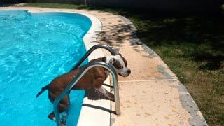 Ladder Dog Cooper