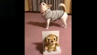 Watch these Goofy animals go wild