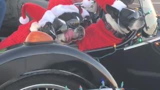 Santa's Little K9 Helpers
