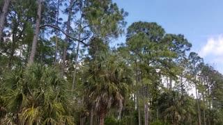 Naples Florida.... Viral Freedom