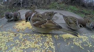 Beautiful birds eating their food: cute