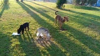 english mastiff mdium sized dog breeds dog names for boys