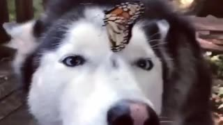 Beautiful nature butterfly on a dog