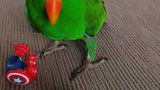 Angry Parrot Destroys Mr Potato Head