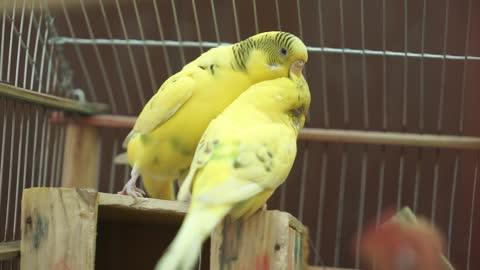 beautiful birds singing (15)