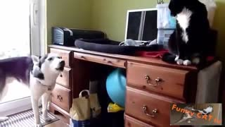 First time meeting between cats and dogs