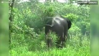 Elefante é resgatado em canal no Sri Lanka