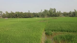 The natural beauty of the village