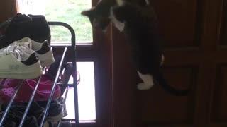 Clever Kitty Open Front Door