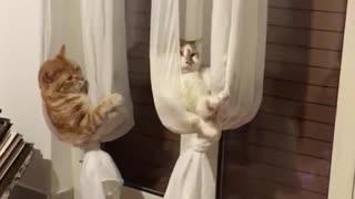Curtains Turned into Cat Hammocks
