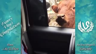 Sacred from Animals funny video watch