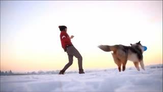 Amazing Skills brain training for dogs