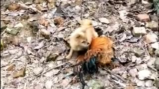 funny video animals watch now !!