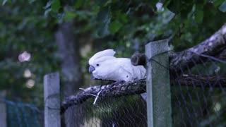 Cute White Parrot Dancing