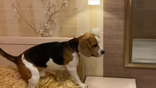 Smart Dog Switches off Lights