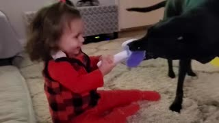 Puppy Toddler Tug of War