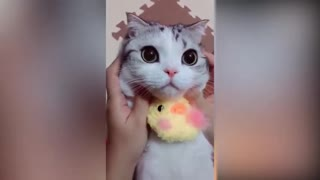 super cute cats and owners