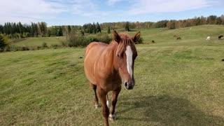 A horse named Zeus