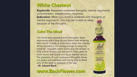 Bach Flower Remedies for Insufficient interest in present circumstances